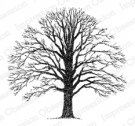 Impression Obsession Rubber Stamp - Bare Tree