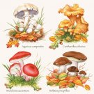 CraftEmotions Napkins - Collection Mushrooms