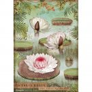 Stamperia A4 Rice Paper Sheet - Amazonia Water Lily