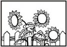 Nellie's Choice Embossing Folder - Sunflowers