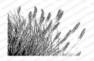 Impression Obsession Rubber Stamp - Wispy Grass