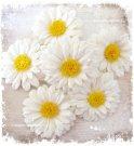 6st Large Daisies
