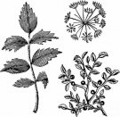 Stamperia Cling Mounted Natural Rubber Stamps - Herbarium