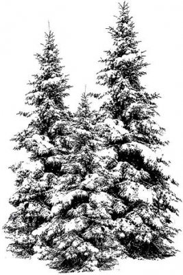 Deep Red Cling Stamp - Winter Pines